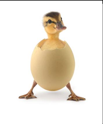 imagen1_pollo